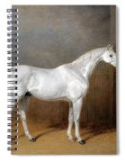 A Favourite Grey Horse Belonging To George Reed Standing In A Loose Box Spiral Notebook