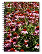 A Field Of Echinacea Spiral Notebook