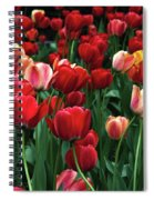 A Field Of Tulips Spiral Notebook