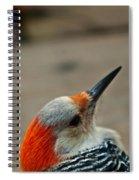 A Firey Redhead Spiral Notebook