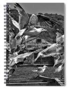 A Flock Of Seagulls Flying High To Summer Sky Spiral Notebook