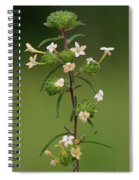 A Flower Tower Spiral Notebook
