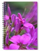 A Fly And A Flower Spiral Notebook