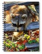 A Foraging Raccoon Spiral Notebook