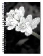 A Glowing Daffodil Spiral Notebook