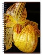 A Golden Slipper Spiral Notebook