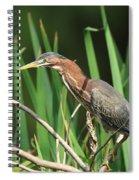 A Green Heron Stalks Prey Spiral Notebook