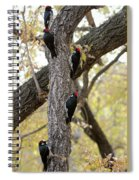 A Group Of Acorn Woodpeckers In A Tree Spiral Notebook