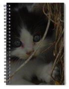 A Hiding Kitten Spiral Notebook