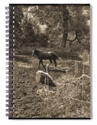 A Horse In The Field Spiral Notebook