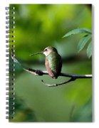 A Hummingbird Rests Spiral Notebook