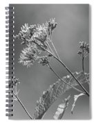 A Lazy Summer Day - Joe Pye Weed 2 Bw Spiral Notebook
