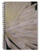 A Light Within Petals Spiral Notebook