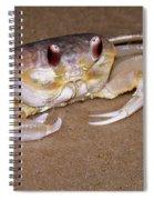 A Little Crabby Spiral Notebook