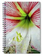 A Little Pink Spiral Notebook