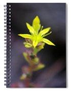 A Little Yellow Star  Spiral Notebook