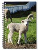 A Longwool Lamb Spiral Notebook