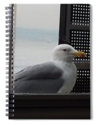 A Looking Seagull Spiral Notebook