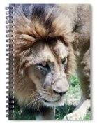 A Male Lion, Panthera Leo, King Of Beasts Spiral Notebook