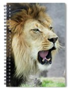 A Male Lion, Panthera Leo, Roaring Loudly Spiral Notebook