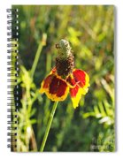 A Mexican Hat Flora Portrait Spiral Notebook