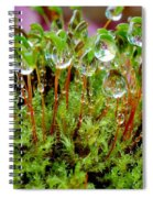 A Microcosm Of The Forest Of Moss In Rain Droplets Spiral Notebook