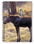 A Moose In Early Spring  Spiral Notebook