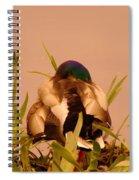 A Napping Mallard Spiral Notebook