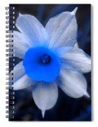 A Narcissist Star Spiral Notebook