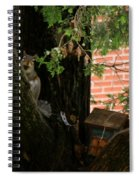 A Nut Spiral Notebook