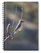 A Pair Of Cedar Waxwings Enjoying Lunch Spiral Notebook