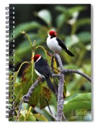 A Pair Of Redheads Spiral Notebook