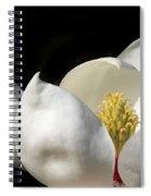A Peek Inside A Magnolia Spiral Notebook