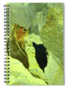 A Perky Chipmunk  Spiral Notebook