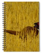 A Pheasant Looking For A Mate Spiral Notebook