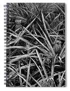 A Pineapple Field Near Nassau, Bahamas, 1883 Spiral Notebook