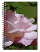 A Pink Rose  Spiral Notebook