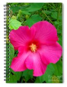 A Pink That Pops Spiral Notebook