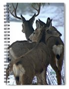 A Place To Rest Your Head Spiral Notebook