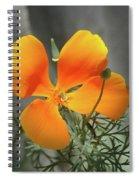 A Poppy Unfurled  Spiral Notebook
