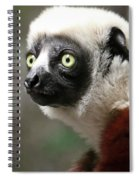 A Portrait Of A Sifaka Primate, A Large Lemur Spiral Notebook
