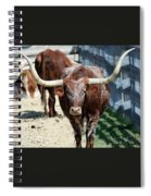 A Portrait Of A Texas Longhorn Steer Spiral Notebook