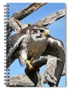A Prairie Falcon Against A Blue Sky Spiral Notebook