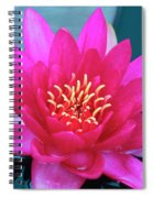 A Red And Yellow Water Lily Flower Spiral Notebook