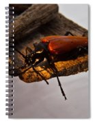 A Red Glowing Beetle Spiral Notebook