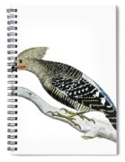 A Red Headed Woodpecker 2 Spiral Notebook