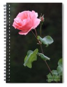 A Rose For Rodin Spiral Notebook