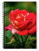 A Rose In Los Gatos Spiral Notebook