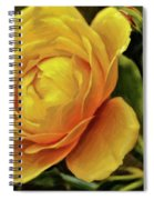 A Rose Is A Rose Is A Rose Spiral Notebook