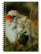 A Scruffy Fluffy Fella Spiral Notebook
